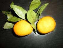 Mandarines sur une branche avec des feuilles Image stock