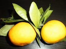 Mandarines sur une branche avec des feuilles Images libres de droits