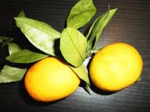 Mandarines sur une branche avec des feuilles sur un fond noir Photographie stock libre de droits