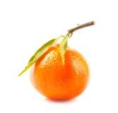 Mandarines Stock Photo