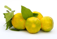 Mandarines vertes Photographie stock