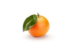 Mandarines on white background Stock Photography