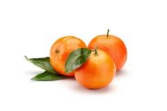 Mandarines on white background Stock Images