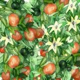 Mandarinfilialer med gr?na sidor, blommor p? en isolerad vit bakgrund, vattenf?rgillustration, citrus samling, apelsin vektor illustrationer