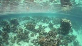 Mandarinfish Lake Palau. Corals grow in a marine lake, called Mandarinfish Lake, in the Republic of Palau. Marine lakes are saltwater lakes surrounded by stock video footage
