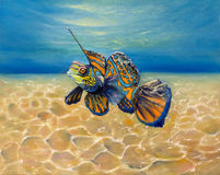 Mandarinfish Stock Photo