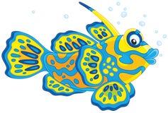 Mandarinfisk Fotografering för Bildbyråer