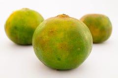 Mandarini (arance) Immagine Stock