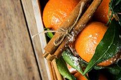 Mandarini arancio vibranti sui bastoni di cannella delle foglie verdi dei rami legati con cordicella nel fondo del bosso Nuovo an Fotografia Stock Libera da Diritti