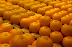 Mandarini cinesi del nuovo anno Fotografia Stock