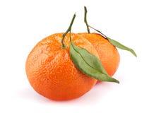 Mandarini con i fogli isolati su bianco Fotografie Stock Libere da Diritti