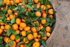 Mandarini con il mercato asiatico degli agricoltori delle foglie Fotografia Stock Libera da Diritti