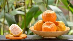 Mandarini di Ponkan Fotografia Stock