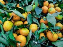 Mandarini in foglie Fotografia Stock Libera da Diritti