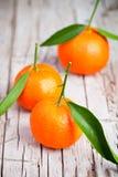 Mandarini freschi con le foglie Immagine Stock