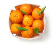 Mandarini isolati su fondo bianco Immagini Stock