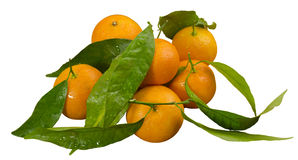 Mandarini, mandarino Fotografia Stock Libera da Diritti
