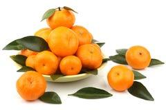 Mandarini maturi Fotografia Stock Libera da Diritti