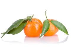 Mandarini maturi con i fogli Immagine Stock