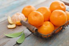 Mandarini nel canestro del metallo Immagine Stock
