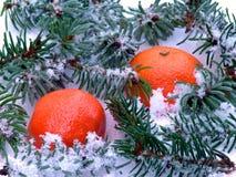 Mandarini nella scena della neve Immagini Stock Libere da Diritti