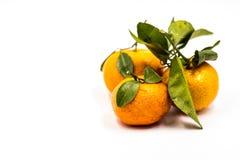Mandarini o mandarini isolati su fondo bianco Fotografia Stock