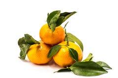 Mandarini o mandarini isolati su fondo bianco Immagini Stock Libere da Diritti