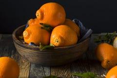 Mandarini organici crudi di Minnela Immagine Stock Libera da Diritti