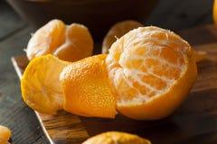 Mandarini organici crudi freschi Fotografia Stock Libera da Diritti