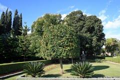 Mandarinier dans le jardin de Bahai Images stock