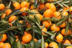 Mandarino Fotografia Stock Libera da Diritti