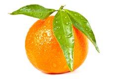 Mandarino bagnato Fotografia Stock Libera da Diritti