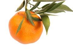 Mandarino con i fogli Fotografie Stock Libere da Diritti