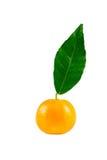 Mandarino con la foglia Fotografie Stock Libere da Diritti