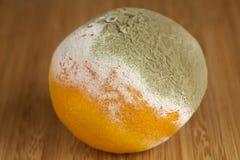 Mandarino decomposto immagini stock libere da diritti