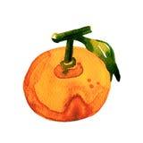 Mandarino dell'acquerello su fondo bianco Fotografia Stock Libera da Diritti