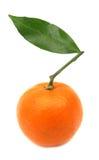 Mandarino della clementina perfetto Fotografie Stock Libere da Diritti
