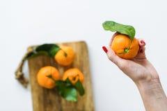 Mandarino della tenuta della mano con un ramo su fondo bianco fotografie stock