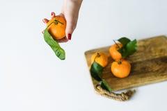 Mandarino della tenuta della mano con un ramo su fondo bianco fotografia stock libera da diritti