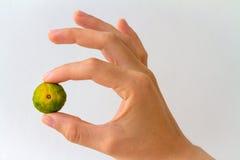 Mandarino di Nasnaran disponibile Fotografie Stock
