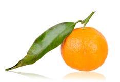 Mandarino di recente selezionato Fotografia Stock