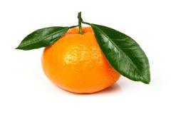 Mandarino fresco con i fogli Fotografie Stock