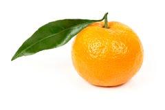 Mandarino fresco con i fogli Fotografia Stock Libera da Diritti