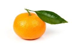Mandarino fresco con i fogli Fotografia Stock