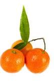 Mandarino fresco con i fogli, fine in su fotografia stock