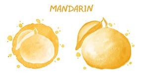 mandarino Illustrazione dell'acquerello Immagini Stock Libere da Diritti