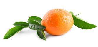 Mandarino (mandarino) isolato su fondo bianco Fotografia Stock Libera da Diritti