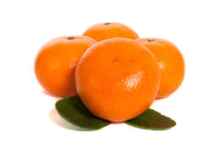 Mandarins. Four mandarins isolated on white background royalty free stock photography