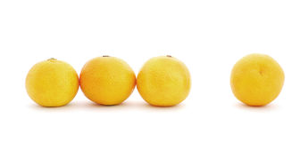 Mandarins. The row of a mandarins isolated on a white background Stock Photos