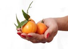 Mandarins. Stock Photos